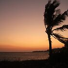 Palm in the sunset by anjumura