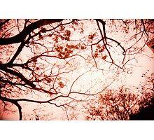Of Trees, Leaves and Branches - Lomo Photographic Print