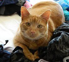 Sammy likes clothes by lisa  gorman