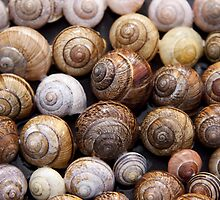 Snail Shells by TilenHrovatic