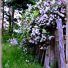 Dame&#x27;s Rocket with Lilacs over Lemurian Fence by TrendleEllwood