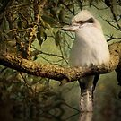 Australian Kookaburra by Kymie