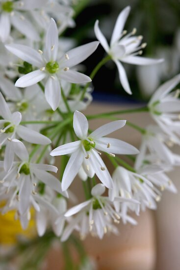 Wild Garlic's Beauties by SmoothBreeze7