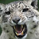 snow leopards teeth by Martynb