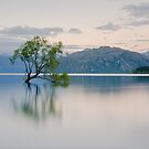That Wanaka Tree by Tony Lim