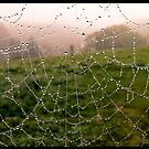 Web with a view by AmandaJanePhoto