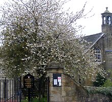 The Cherry Tree by ElsT