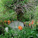 Fenced Poppy Peace by Carla Wick/Jandelle Petters