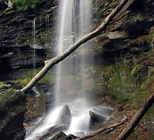 Jacoby Falls Behind The Fallen Trees by Gene Walls