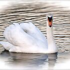 The White Swan of Kennsington Palace by Kent Burton