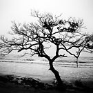 Tree at the Seashore by Pandrot