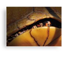Eastern Box Turtle (three-toed Box Turtle) Canvas Print