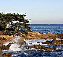 """""""Cypress By The Sea"""" by Gail Jones"""