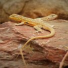 Common Side-blotched Lizard (Pair) by Kimberly Chadwick