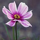 Cosmos by Joy Rensch