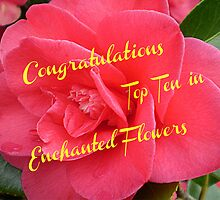 Begonia -Top Ten Banner - Enchanted Flowers by EdsMum