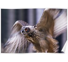 Eagle Owl in Motion Poster