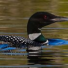 Close up loon by Chris Kiez