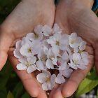 Sakura Petals by kianhwee
