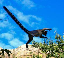 Yahooo -   Ring-tailed Lemur flying    Isalo NP  Madagascar by john  Lenagan