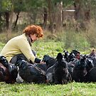 The Chook Whisperer by Leanne Robson