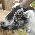 Goat by Miguel1995