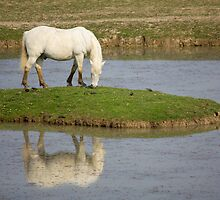 The Camargue Horse by Emmeci74