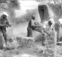 THE FARM WORKERS AT WORK by Magaret Meintjes