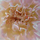 Carnation 1 by Blonddesign