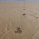 Footprints in the sand -  portrait. by picsl8
