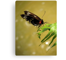 Botanical With A Hint Of Flying Element Canvas Print