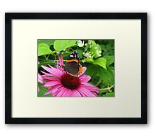 Arched in beauty Framed Print