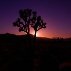 Joshua Tree 1 by Chris Kiez