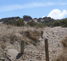 Well walked path over Sandhills, Goolwa Beach, Sth. Coast S. Australia.  by Rita Blom