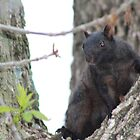 Ninja Squirrel by Keala