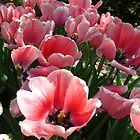Floating pink tulips by MarianBendeth