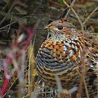 partridge not in a pear tree by Alex Call