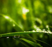 Drops of Jupiter by HD-Photography