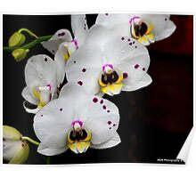 Flowers with water drops Poster