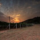 Sunrise at the vineyard by Deepak Varghese