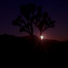 Joshua Tree 2 by Chris Kiez