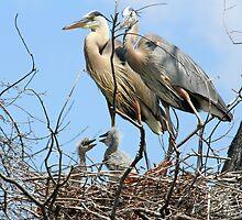 A happy heron family! by jozi1