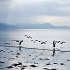 Dance Of The Seagulls by Susie Peek