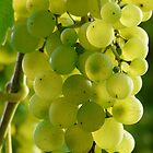 Grapes by TilenHrovatic