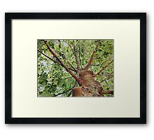 Leaves Lace, watercolor on paper Framed Print
