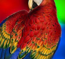 Vintage Rainbow Macaw by Doreen Erhardt