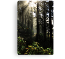 The Path Back Home Canvas Print