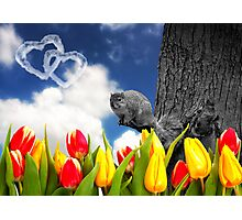 Spring Fever - Squirrel and Tulips Photographic Print