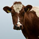 cow by Nicole W.