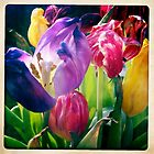 Instagram Tulips by Alex & Louise Martin